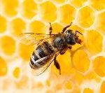 Ден на пчеларя